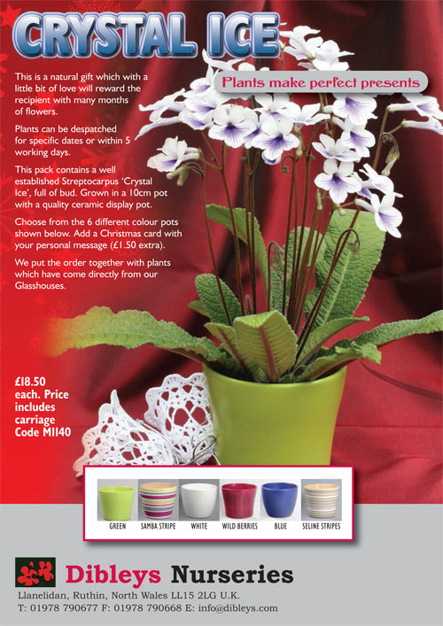 Flowering Crystal Ice and Ceramic Display Pot (1140) AVAILABLE NOW