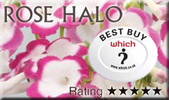 rose-halo-which-best-buy